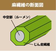 麻繊維の断面図